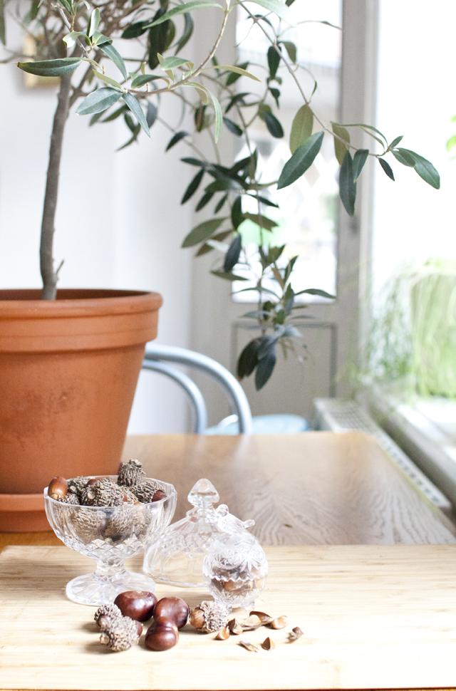 Plantera träd DIY 3